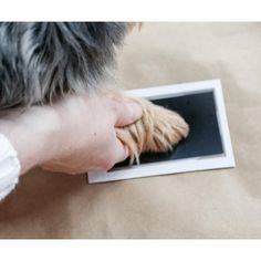 Zeiten Abdruck – oumari Your Pet, Pets, Small Animals, Pooch Workout, Memories, Simple, Animals And Pets
