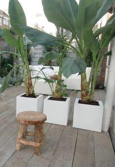 Witte polyester plantenbakken Garden Beds, Garden Plants, Shade Garden, Home And Garden, Big Plants, Tropical Plants, Outdoor Life, Outdoor Living, Pergola