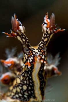 Nudibranch... so cool. I think this is in the sea slug species ...