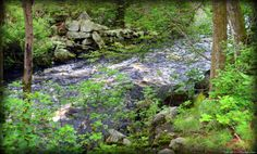 Westport, MA trail hikes.. Noquochoke River By The Ruins