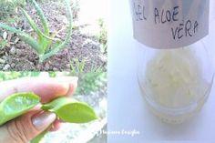 Gel Aloe Vera per la salute e benessere