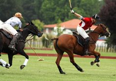 polo horse pictures | Hawks Horse Polo Team Steer Ponies to 2nd Wanderers Win. | Equilink ...