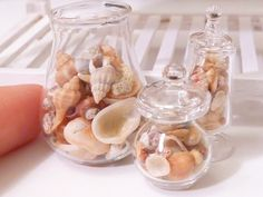Seashell Collection Set