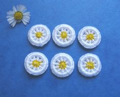 Dorset Button Daisies!