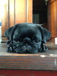 Puppy..