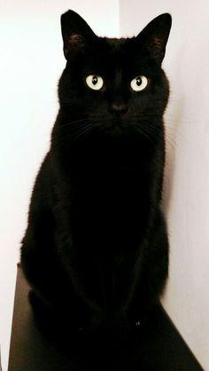 #cat milla #love #animals #blackcat