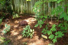 Small oak leaf hydrangea and new hostas Garden Photos, Hydrangea, Leaves, Plants, Hydrangea Macrophylla, Planters, Hydrangeas, Plant, Planting