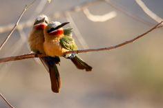 South Africa, Wildlife, Bird, Animals, Animales, Animaux, Birds, Animal, Animais
