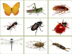 Preschool Themes, Preschool Printables, Insect Crafts, Montessori Materials, Nature Journal, Bugs And Insects, Worksheets For Kids, Kids And Parenting, Kindergarten