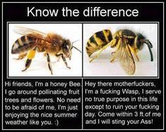 Bee vs. wasp