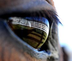 The world shown through a the eye of an horse.  Entered in the 2012 Nat Geo photo contest. Link below    ngm.nationalgeographic.com/ngm/photo-contest/2012/entries...     Horse Training Secrets Revealed