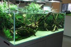 [ MAS ] my aquarium style: 念願のADAギャラリー2