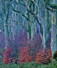 Blue forest, Scotland.