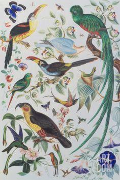 Exotic Parrots, c.1850 Acrylique
