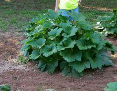 Big fluffy plant!!