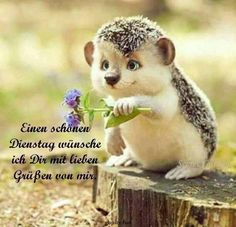 Pin by birgit crews on guten morgen , guten tag Morning Greetings Quotes, Good Morning Quotes, Morning Morning, Creative Picture Ideas, Bible Quotes Images, Animals And Pets, Cute Animals, Inspirational Quotes About Success, Inspirational Message