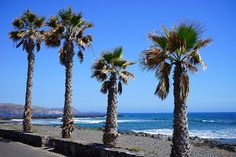 Playa de las Vistas is definitely the best of the south Tenerife beaches. It's a long and wide beach with nice sand. It's great for swimming, and is a great beach for families. There are nice restaurants and bars on the promenade that have gorgeous views. #TenerifeOn #VisitSpain