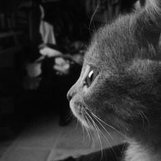 Beautiful, darging, honey, cat, goodpic, mood, eye, perfect, kitten, baby, mybaby