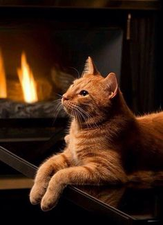 ginger kitty relaxing in front of the fire