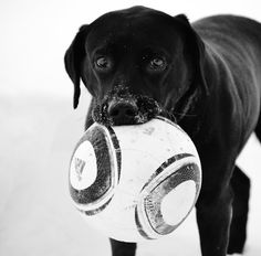 beach soccer with a lab? sign me up.