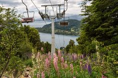 Christine's Observations posted a photo:  In winter this magical place transforms into one of Argentina's premium Ski Lodges. In Summer, like here the chair lifts transport you high over fields of flowers to the top of the Andes mountains from where magical views can be enjoyed.