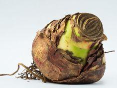 Plantation, Artichoke, Cabbage, Coconut, Fruit, Vegetables, Ethnic Recipes, Food, Gardening