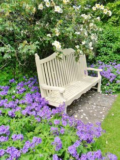 Cream bench with roses and purple flowers in the gardens of Shugborough Hall, Staffordshire, England