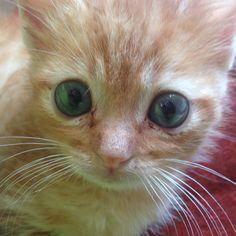 Con questi occhi incredibili e le sue cispie: Messer Pùmolo!