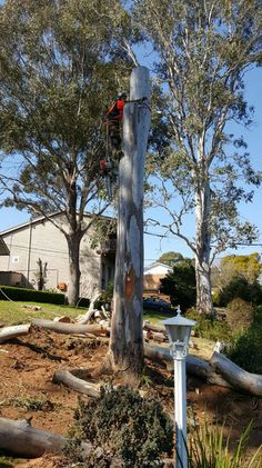 Alex Tree and Gardening Services have over 16 years' experience in Emergency Tree Removal Services in Kentlyn. If your region has experienced stormy weather and violent wind storms it's important that you thoroughly inspect all the trees in your landscaping. For more about Emergency Tree Removal kentlyn you can call us in 0452585258.