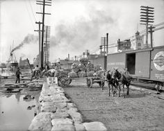 "New Orleans circa 1903. ""Mule teams and the levee."" 8x10 inch dry plate glass negative, Detroit Publishing Company."