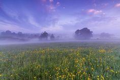 Violet fog / 2048 x 1365 / Nature / Photography | MIRIADNA.COM