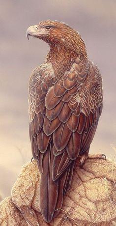Águila audaz - Wedge-tailed eagle - Keilschwanzadler - Aigle d& Pretty Birds, Love Birds, Beautiful Birds, Animals Beautiful, Cute Animals, Animals And Pets, Little Birds, Wedge Tailed Eagle, Wallpaper Animes