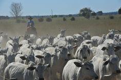 Brasil reconquista mercado egípcio para produtos da pecuária