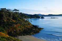 Bay of Islands, North Island New Zealand. Now me and Jeff can walk the path to Mordoor.. Barefoot.