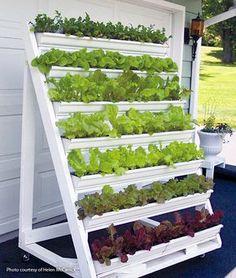 Grow greens in this DIY vertical garden Grow greens on your patio in this movable vertical planter: Vertical Garden Design, Vertical Planter, Indoor Vertical Gardens, Small Vegetable Gardens, Vegetable Garden Design, Vegetables Garden, Vegetable Gardening, Gutter Garden, Easy Garden