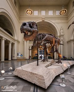 Tyrannosaurus rex skeleton in the Main Hall of the Field Museum of Natural History at 1400 S Lake Shore Drive in Chicago, Illinois on April 10, 2014. Sue is the most complete and best-preserved Tyrannosaurus rex fossil yet discovered. Sue is 42 feet long, stands 13 feet high at the hips and is 67 million years old. | Photo by Glenn Nagel on 500px