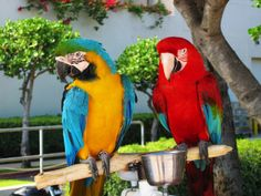 There's nothing worse than an unhappy parrot. Worst case scenario an unhappy parrot can cause death. Pretty Birds, Beautiful Birds, Talking Parrots, Parrot Pet, Bird Book, Parakeet, Bird Feathers, Amazing, Awesome
