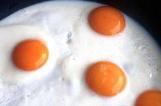 eggs-kj5.jpg (73777 Byte) eggs