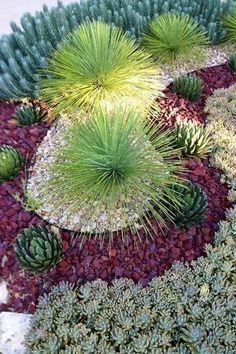 Rustic Landscape/Yard with Succulent garden, Desert landscaping, Blue Spruce Stonecrop Sedum reflexum 'Blue Spruce'