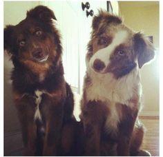 #BLUFFDALE #UTAH #Lostdogs 8-11-13 Two males  https://www.facebook.com/photo.php?fbid=10201734486873243=a.4341538905987.180483.1512885445=1