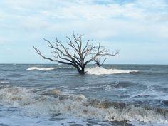 standing alone - Botany Bay, Edisto Island, SC