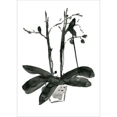 Orchid ink drawing original ink painting modern art orchid