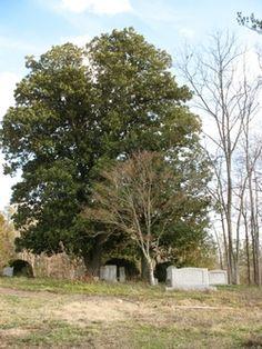 Penny-Trice Family Cemetery  Durham  Durham County  North Carolina  USA