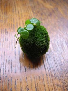 Kokedama, a traditional Japanese art form that uses moss as a container for a plant