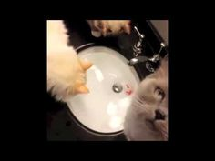 FUNNY VIDEOS  Funny Cats   Funny Animals   Funny Moments   Funny Cat Vines