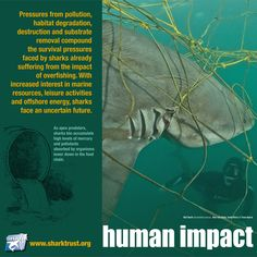 Pollution, habitat degradation, destruction and substrate removal compound the survival pressures faced by #sharks already suffering from the impact of #overfishing.