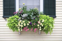 The Wonderful Windowbox