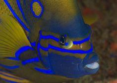 Sea Life Fish 1820mm Jazz Snaps