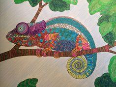 Millie Marotta's Animal Kingdom - finished chameleon!