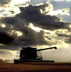 Dad raced the weather to harvest the wheat -- year after year.  I even drove a wheat truck to the elevator one summer--not too common in my area for teen girls!  Kansas Beauty.